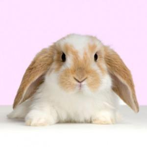 /pics/items/animals/Bunny