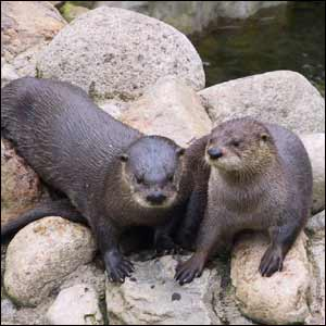 /pics/items/animals/Otter